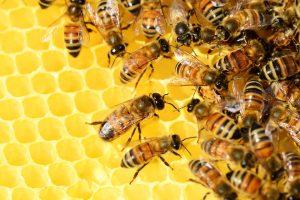 Ползите за Здравето от Пчелния Прополис