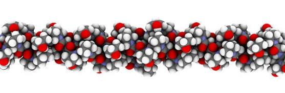 молекула колаген