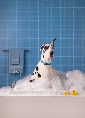 куче с големи уши във вана