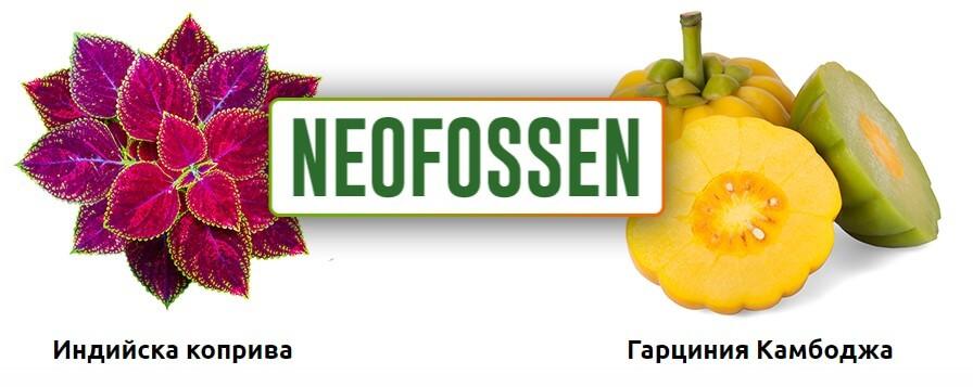 Neofossen, състав