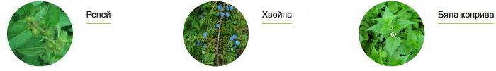 Репей Хвойна Бяла Коприва снимки