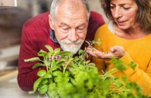 Хранене и Третиране с Билки на Увеличената Простата