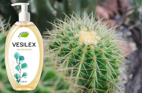 Vesilex, кактус