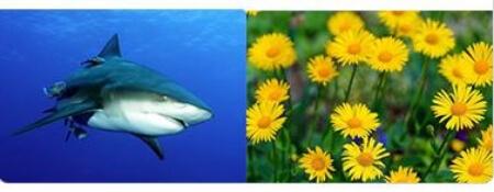 съставки мове флекс, арника монтана и акула