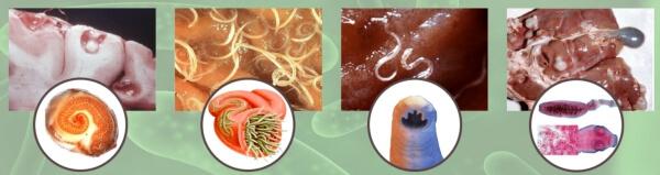 паразити вътрешни снимки